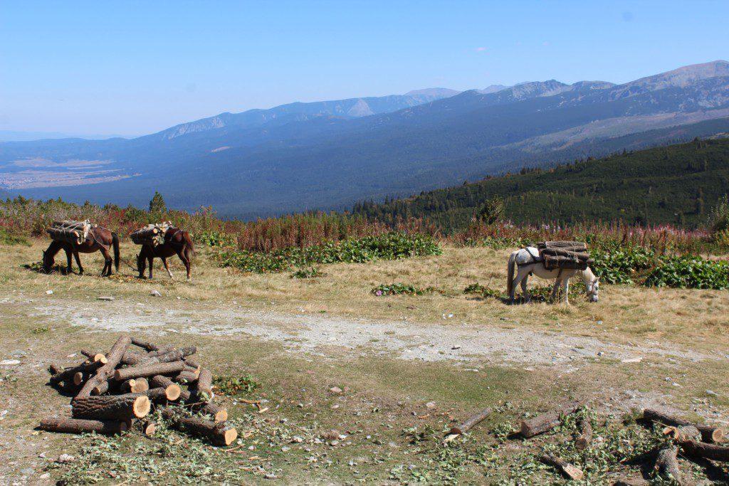 Pferde vor Bergen