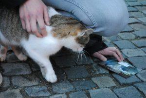 """""""Mia"""" - die einzige Katze, die gerne gestreichelt werden wollte..."""
