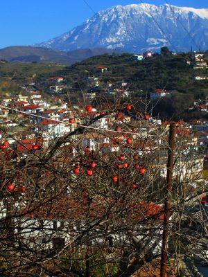 Hurmabaum in Berat